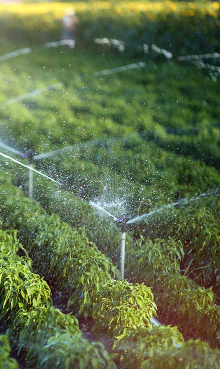 Perfectly Edged Lawncare LLC Irrigation System Repair