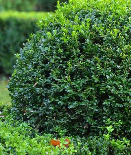 Perfectly Edged Lawncare LLC Shrubs & Hedges