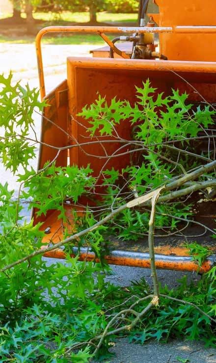 Perfectly Edged Lawncare LLC Tree Trimming
