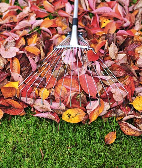 Perfectly Edged Lawncare LLC Fall Clean Up